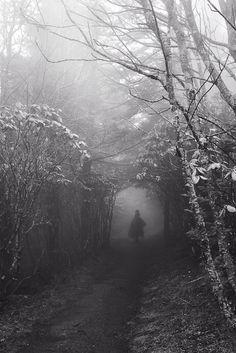 down the frozen trail I go through forest, mist, I break through snow...