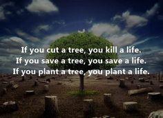kill the trees kill the planet - Ecosia