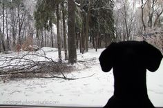 Toronto ice storm http://www.celebritydachshund.com/2013/12/27/holiday-traveling-with-dachshunds/