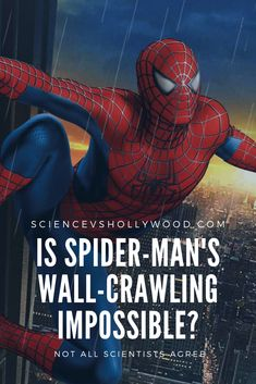 Can Spider-Man really stick to walls? See Movie, Film Movie, Science Articles, Stephen Colbert, Man Images, Geckos, Music Tv, Science And Nature, Thesis