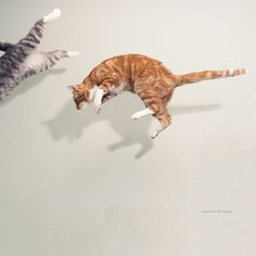 Flying cats by Paula Danielse, http://www.pauladanielse.nl/
