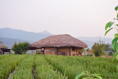 thatched roof houses korea | for Traditional Thatched Roof House In Andong Hahoe Village Korea ...