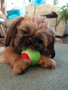 Play Time!-Chewy Booey