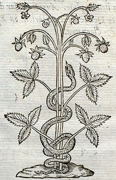 Pictura of Paradin, Claude: Devises heroïques (1557): Latet anguis in herba.