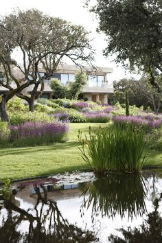 front yard with large planting beds. Love the swathes of purple. Use salvia or lavender