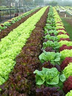 Hydroponics Did you know that it´s possible to cultivate plants without soil? These innovative techniques are hydroponics and aeroponics. Hydroponics c. Vegetable Garden For Beginners, Vegetable Garden Design, Diy Garden, Edible Garden, Gardening For Beginners, Vegetable Gardening, Indoor Aquaponics, Aquaponics Fish, Aquaponics System