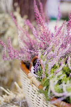 A basket of heather would be  lovely for decoration on the table in Macbeth's home or in a vase which can be put anywhere.