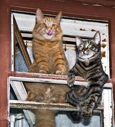 сидит кошка на окошке: 11 тыс изображений найдено в Яндекс.Картинках