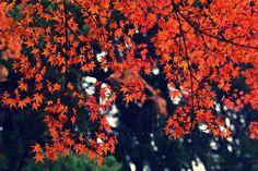 Pölcz Klaudia - kisklau: Októberi ősz, ködös reggellel és napos délutánnal