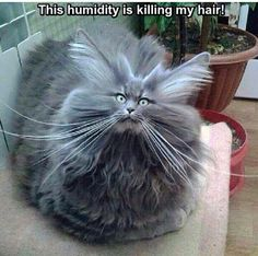 As cute as you are sweetheart, I'm sorry to have to tell you that you're definitely having a bad hair day. Wonder if something close to a cat friendly gel might smooth down the sides. I'm trying so hard not to laugh -sorry.