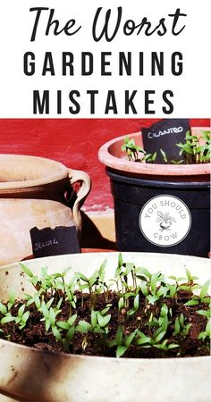 The 10 worst gardening mistakes you can make. Plus how to avoid making gardening mistakes. via @whippoorwillgar