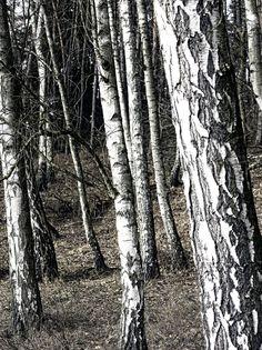 Fototapete, Holz (Nr. 8576) www.berlintapete.de