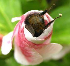 bee's bottom! :D