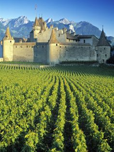 Top Places To Travel In Switzerland.Switzerland has it all. An overview of the top places to visit in switzerland. Top Places To Travel, Places To See, The Places Youll Go, Europe Places, Chateau Medieval, Medieval Castle, Medieval Fortress, Places Around The World, Travel Around The World