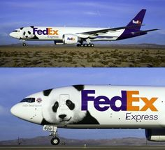Pandas on a Plane: Super Fuel-Efficient FedEx Plane to Transport Pandas to China in Record Time : TreeHugger