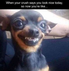 Funny Dogs That Will Make Your Day Source by wackyypics dog dog memes dog videos videos wallpaper dog memes dog quotes dogs dogs pictures dogs videos puppies puppy video Funny Animal Jokes, Really Funny Memes, Stupid Funny Memes, Cute Funny Animals, Funny Relatable Memes, Funny Animal Pictures, Cute Baby Animals, Funny Cute, Funny Dogs