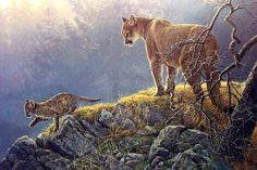 A complete collection of the wildlife art of Robert Bateman: prints, originals, canvases paper prints and books. Wildlife Paintings, Nature Paintings, Wildlife Art, Animal Paintings, Big Cats Art, Cat Art, Batman, Animal Sketches, Canadian Artists
