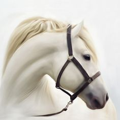 'Beautiful White Horse ' by JasonVine Framed Prints, Canvas Prints, Art Prints, Laptop Skin, Iphone Wallet, Horses, Stuff To Buy, Beautiful, Design