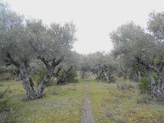 La SPG-21 empieza entre olivos