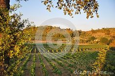 Florence chianti Tuscany Italy  for agriculture vineyards and wine growing near the mountains