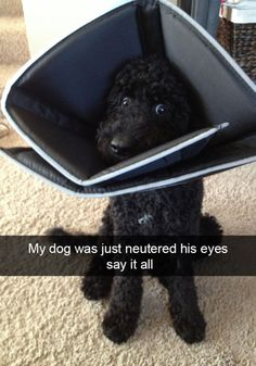 If you've ever owned a dog, you'll find the hilarious and heartwarming truth in these photos Funny Animal Pictures, Cute Funny Animals, Funny Cute, Hilarious, Top Funny, Funniest Snapchats, Dog Snapchats, Funniest Memes, Funny Dog Memes