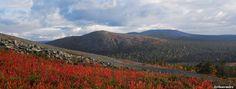 Läheltä katsottuna niin punaisena loimuava tunturikanervikko näyttäytyy kauempana katsottuna oranssin ja ruskean sävyisenä, kuten kuvasta voi huomata keskellä näkyvän Kesänkitunturin kupeesta.