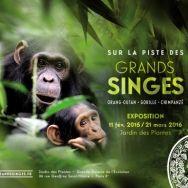 Grâce à la nouvelle exposition du Muséum National d'Histoire Naturelle, partez à la rencontre des grands singes (chimpanzés, gorilles et orangs-outans) et de leur environnement ! Construit en ...