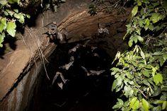 Sunset Bats