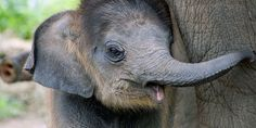 Stop American Zoos stealing 18 elephants from the wild!