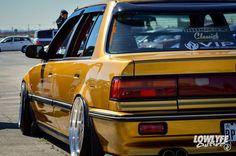 Golden Nugg