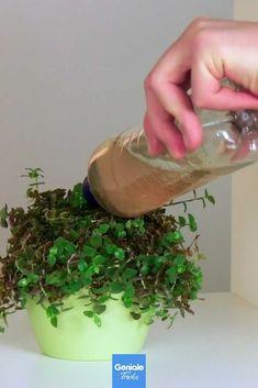 Indoor Garden, Outdoor Gardens, Mdr Garten, Good To Know, Life Hacks, Planter Pots, House Styles, Tips, Nature