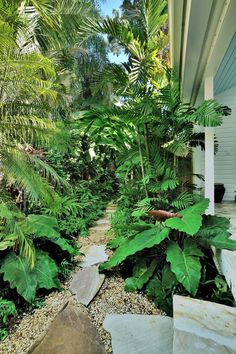 Tantalizing path through jungle like foliage- large leaves in foreground, smaller further on use perspective to good advantage.