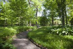 The Missouri Botanical Garden has such a variety of trees! Here is an example of the beautiful, green landscape we have in the summer.
