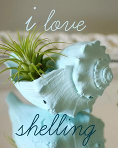 Painted whelk shell with air plant: http://www.etsy.com/shop/ByTheSeashoreDecor?section_id=12848269&ref=shopsection_leftnav_8 I love shelling.