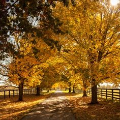 The South's Best Fall Color: Sugar Maple Drive