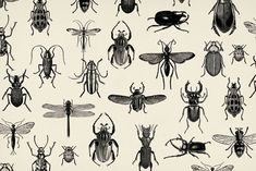 bugs by Soil Design. Black and white #wallpaper
