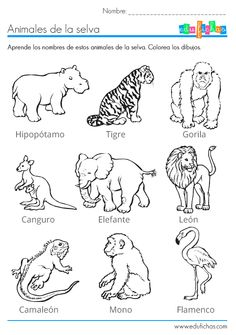 Los animales de la selva para colorear: http://www.edufichas.com/actividades/recursos-educativos/los-animales-de-la-selva-para-colorear/  #animales #infantil #spanish #kids