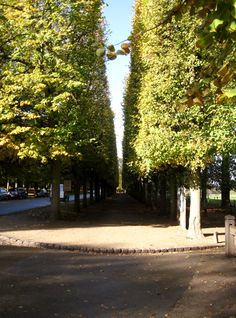 Long walkway surrounded by perfectly trimmed trees towards the gardens of the castle of Versailles..