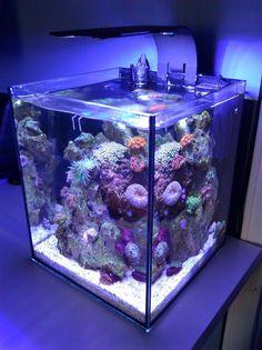 800 773 pixel reef aquarium pinterest. Black Bedroom Furniture Sets. Home Design Ideas