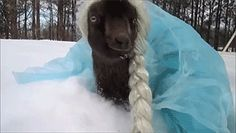 Let it goat!   #Amazing #Animals #Awesome #Funny #FunnyGifs #Gif #Gifs #Hilarious #Humor #LOL #ROFL #WTF