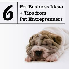 Photo Lab has a small contribution to this great article by The Pet Anthology: 6 Top Pet Business Ideas + Advice from Pet Entreprenuers