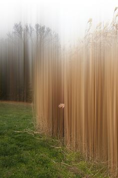 Ellen Jantzen, untitled (2013)So new I have not titled this yet