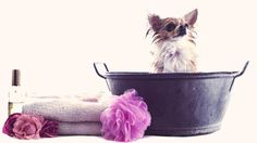 Tried this and we love it! Shampoo for Dogs - Homemade and Natural Shampoo for Your Pet | PetCareRx