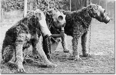 Pre-Geneva Protocol pooches had nothing to fear once their human companions forced them to strap one of these babies onto their little doggie craniums. Except for, you know, all the bullets and explosions and stuff.