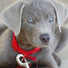 I want one so badly