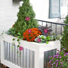 Fall container gardenWelcome fall with a harvest-hued medley of mums, asters, and leafy vegetables.  A. Dwarf Alberta spruce B. Chrysanthemum C. Ornamental kale D. Ornamental cabbage E. English ivy