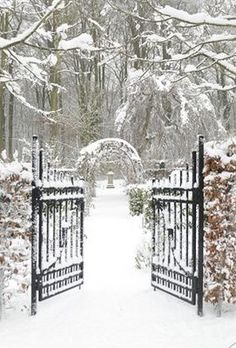 Winter Wedding | Winter Wonderland | Snowy Scene |