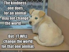 The kindness one does for an animal...