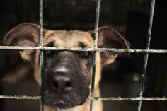 """No one wants animals to be mistreated for films, such as """"A Dog's Purpose""""—but they are. So decide for yourself: Could you handle life as a dog """"actor""""?"""