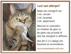 Last van allergie of hooikoorts probeer dit eens in een theelepel amandelolie of olijfolie.